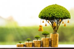 Illustration of a money tree growing out of coins